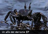 A un año del derrame de BP el Golfo de México continúa sufriendo las consecuencias
