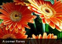 Conviértete en un «Come flores» (Parte I)