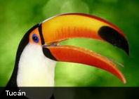 1214 especies de aves están amenazadas en el mundo