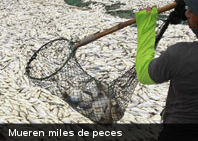 Mueren miles de peces por calentamiento del agua de un lago