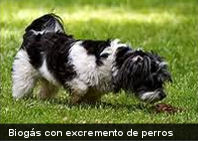 Producen biogás por medio de excremento de perros