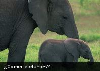 Insólito: 10 animales que (para algunos) se comen