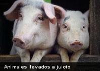 Insólito: Animales llevados a juicio