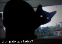 Insólito: Un gato que ladra y después disimula (+Video)