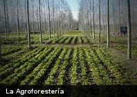 ¿Qué es la Agroforestería?