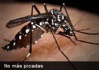 Si tienes un Smartphone ya los mosquitos no serán un problema