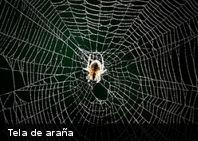 ¿De qué están hechas las telas de araña?