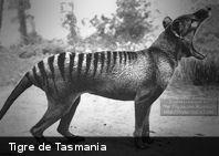 La leyenda del tilacino, el ya extinto «tigre de Tasmania»