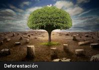 10 datos que deberías saber sobre la deforestación