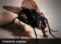 Tecnología: Insectos reales convertidos en espías