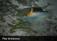 Los peces sí usan herramientas (+Video)