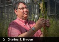 Descubren una planta misteriosa en un cementerio de Misisipí