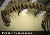 Estudio revela que dinosaurios recorrían grandes distancias en busca de alimento