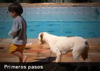 Los primeros pasos de niños y animales comparten un mecanismo neuronal similar