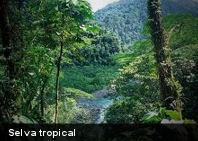 Año 2100: Fecha para el ocaso de las selvas del mundo