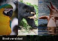 La pérdida de biodiversidad perjudica nuestra salud