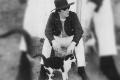 John Lennon fue un gran amante de los gatos