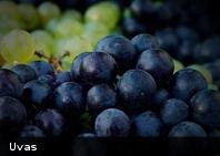 Consumo de uvas retrasa degeneración macular