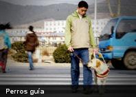 Perros callejeros serán entrenados para ayudar a gente con dificultades auditivas
