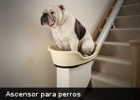 Te presentamos un curioso ascensor para perros (+Foto)