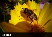 Pesticidas comunes provocan la desaparición masiva de abejas