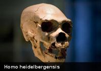 Homo heidelbergensis: 200 mil años anterior al neandertal complican la teoría de la evolución