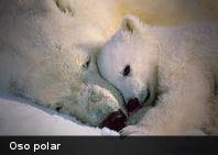 10 de los animales que más muertes causan al año
