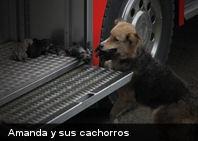 Salvó a sus cachorros de un incendio llevándolos al camión de bomberos (+Fotos)