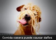 La comida casera puede causar daños a tu mascota