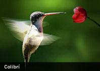 Según estudio las aves ven mejor los colores que los humanos