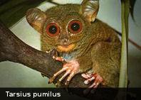Ecología: Los 25 primates más amenazados del mundo