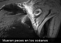 Ecología: preocupación ante la posible escasez de alimentos marinos