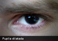 Según estudio: las pupilas pueden revelar la excitación erótica
