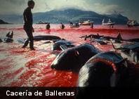 Corea del Sur abandona la cacería de ballenas para supuestos fines científicos