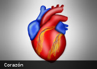 Crean marcapasos biológico hecho con músculos del corazón