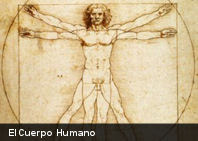 10 increíbles hechos sobre el cuerpo humano