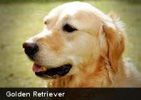 Podemos percibir el estado emocional de un perro en su rostro