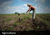 7 métodos de agricultura sustentable para combatir la hambruna del futuro