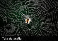 ¿Sabes cuáles son las tres arañas más venenosas de la Tierra?