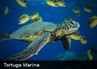 10 datos interesantes sobre los mares