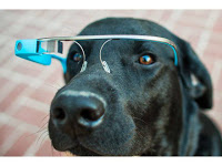 Los perros también podrán usar los Google Glass