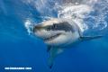 10 curiosidades sobre los Tiburones