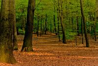 Descubren el bosque más antiguo del mundo en Nueva York
