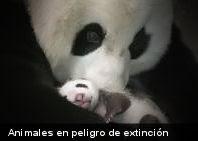 Japón creará banco de esperma de animales en peligro de extinción