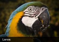 Las aves con cerebro más grande sufren menos de estrés