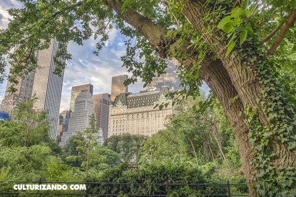 ¿Por qué es importante tener árboles en las ciudades?