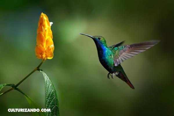 La naturaleza en 20 curiosos datos que quizás no sabías (+Video)