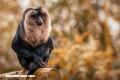 Estos son los lugares del planeta indispensables para evitar la extinción de especies