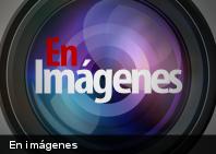En Imágenes: 10 curiosas especies descubiertas este 2013