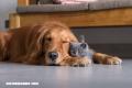 La Nota Curiosa: ¿Quiénes son más inteligentes, los perros o los gatos?
